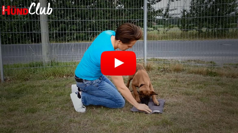 Auf die Decke schicken, Teil 1: Den Hund locken – mit Raphaela Niewerth