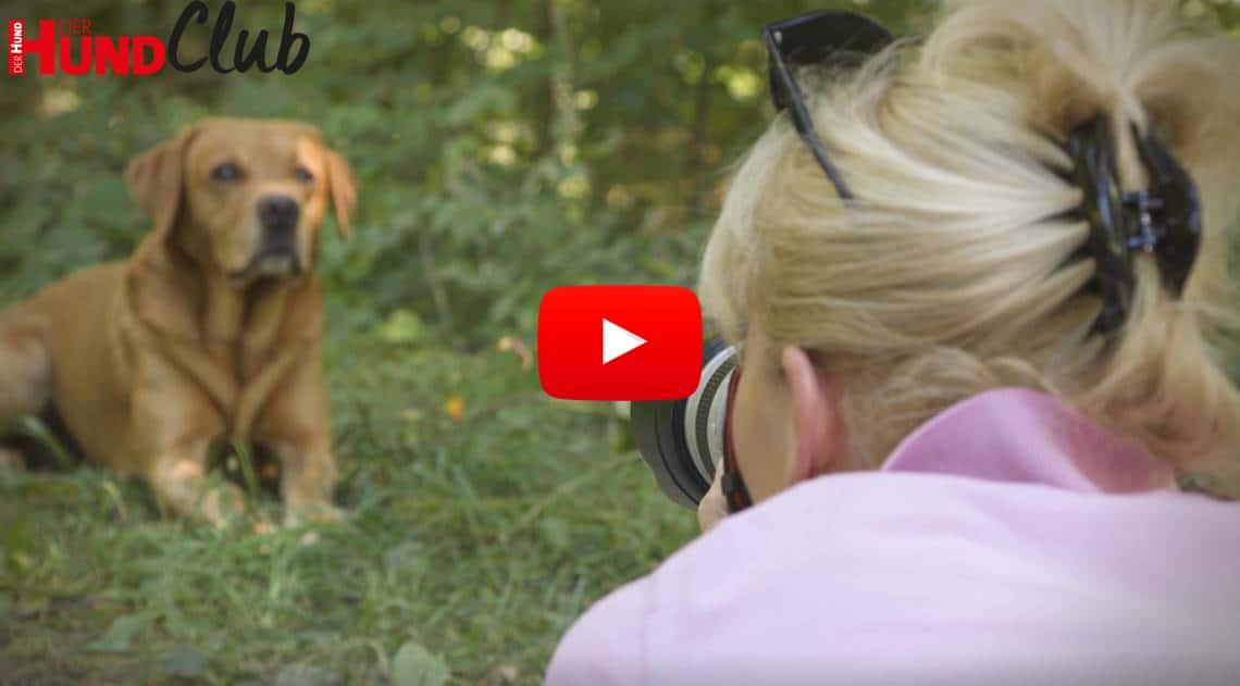 Hunde fotografieren: die Bildgestaltung – mit Regine Heuser
