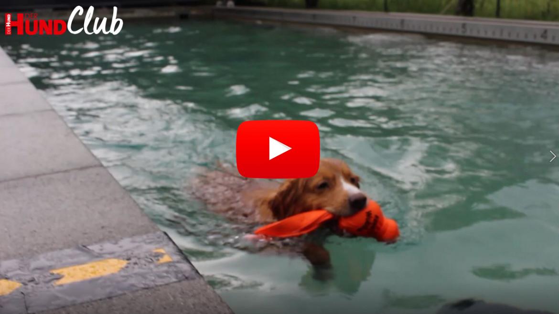 Hundesportart: Dock Diving