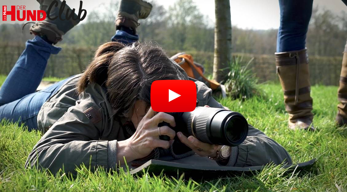 Hunde fotografieren: Hunde in Bewegung – mit Regine Heuser