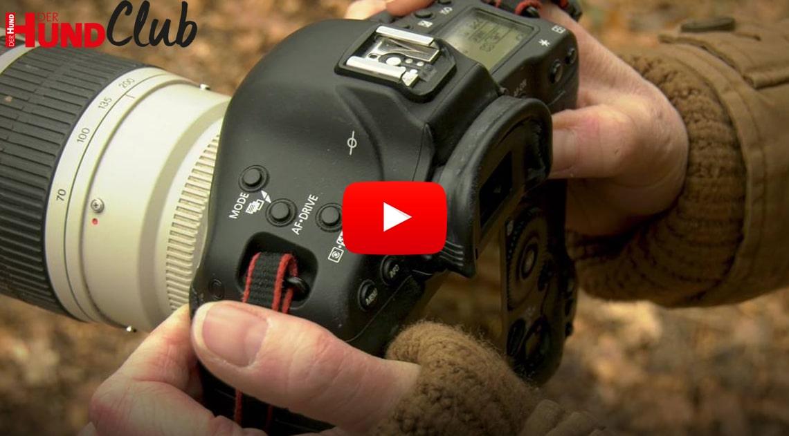 Hunde fotografieren: der ISO-Wert der Kamera – mit Regine Heuser