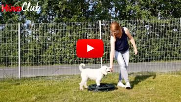 Die Motorik von Hunden trainieren – mit Raphaela Niewerth