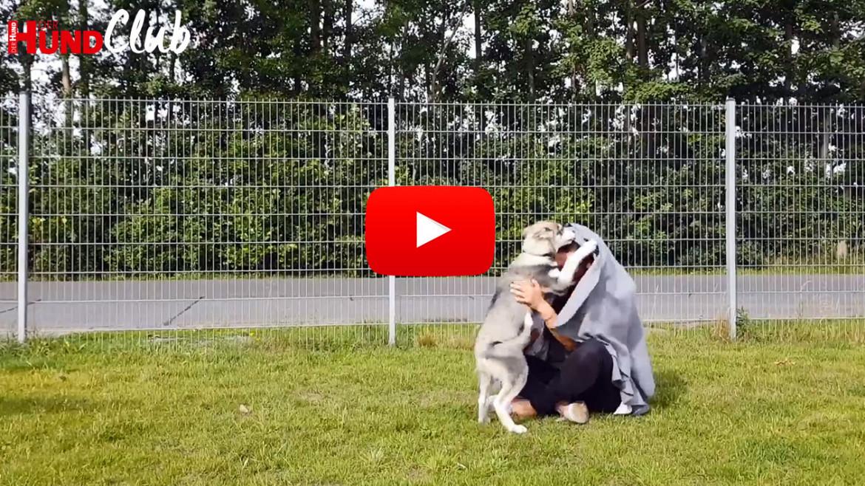 Die Reaktionen von Hunden auf optische und akustische Reize – mit Raphaela Niewerth