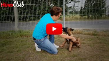 Hundebeine richtig fixieren – mit Raphaela Niewerth