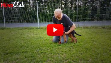 Hunde richtig festhalten – mit Raphaela Niewerth