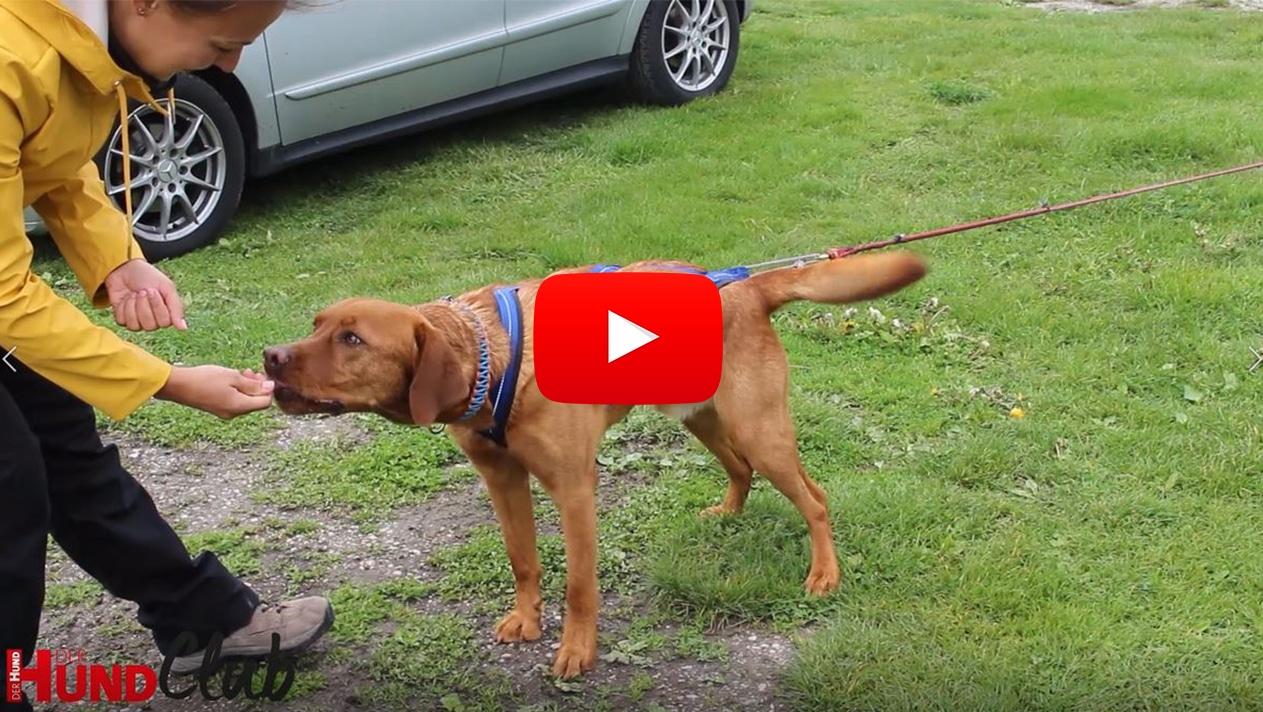 Zughundesport – Grundlagen