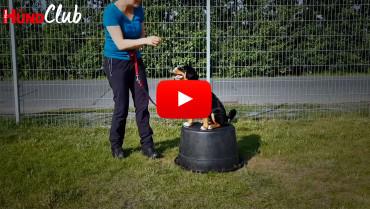 Die Körpersprache von Hunden – mit Raphaela Niewerth