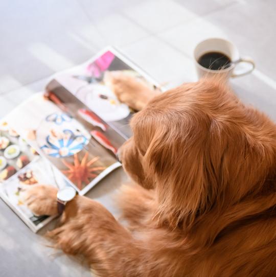 Magazin lesen
