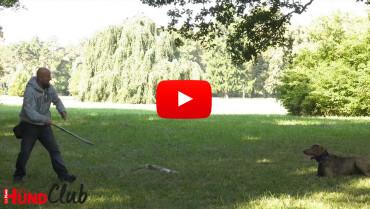 Impulskontrolle: bewegte Reize ignorieren – mit Holger Schüler