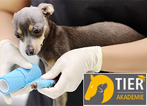 Online Kurs: Erste Hilfe bei Hunden