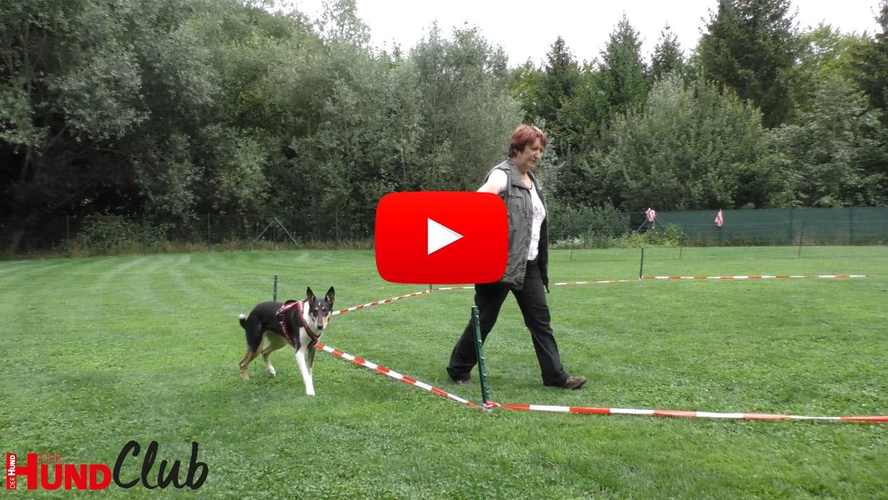 Longieren für Hunde – mit Hildegard Stepberger
