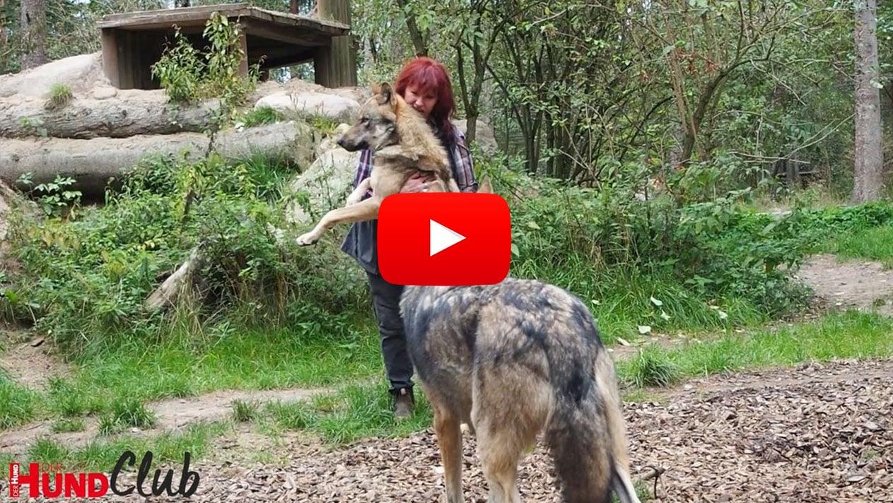 Interview mit Wolfsexpertin Tanja Askani