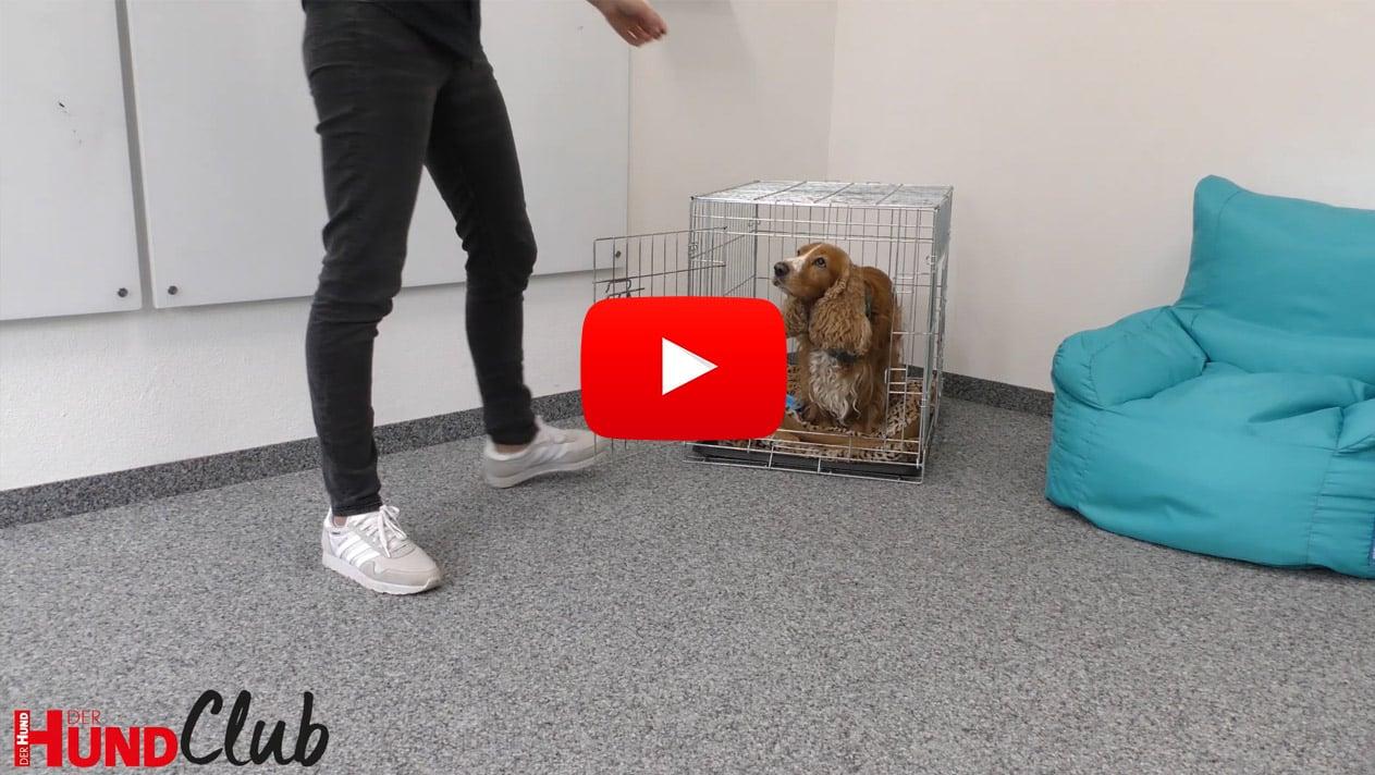 An die Hundebox gewöhnen – mit Veronika Rothe
