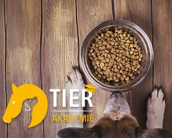 Online-Kurs: Hundeernährung – Gewusst wie!