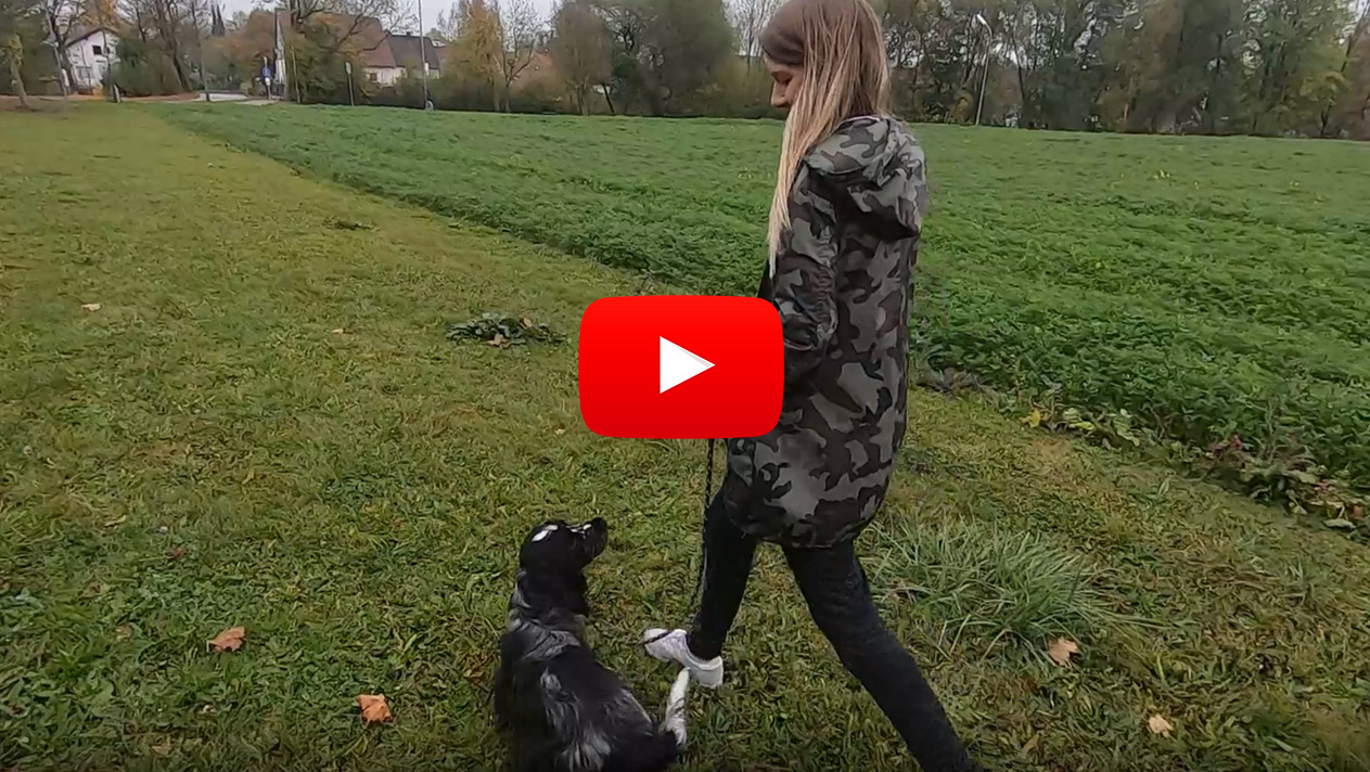 Leinenführigkeit leicht gemacht – mit Veronika Rothe
