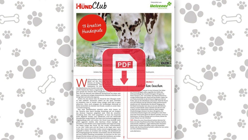Download: 13 kreative Hundespiele