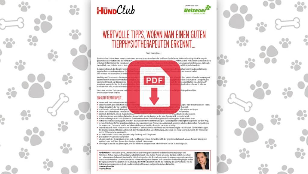 Download: Einen guten Tierphysio erkennen