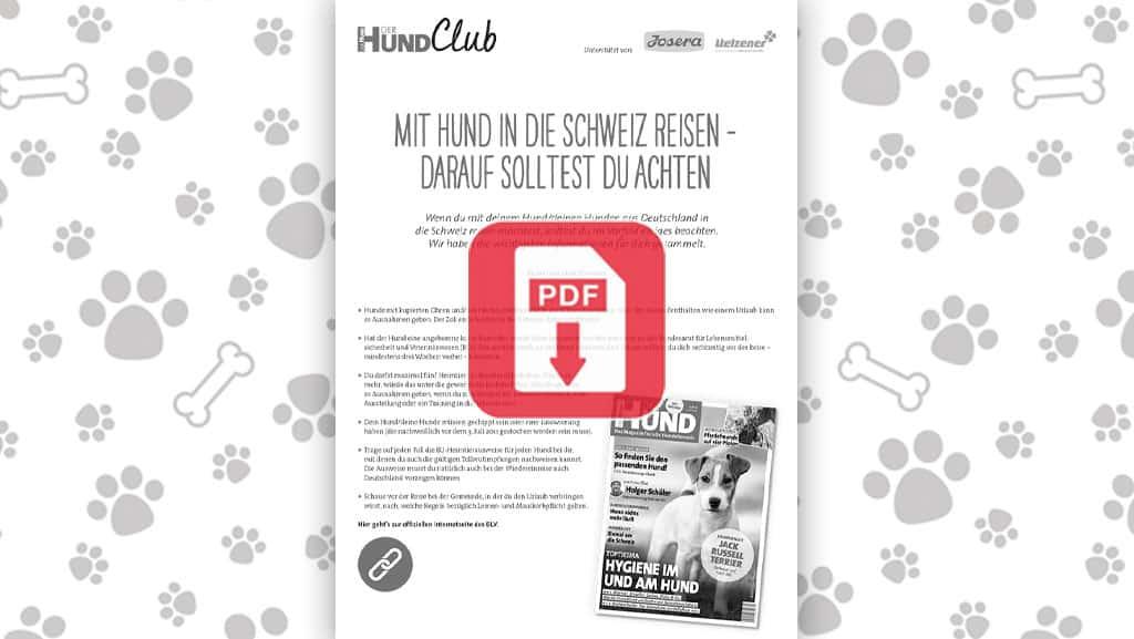 Download: Mit Hund in die Schweiz einreisen – das solltest du beachten