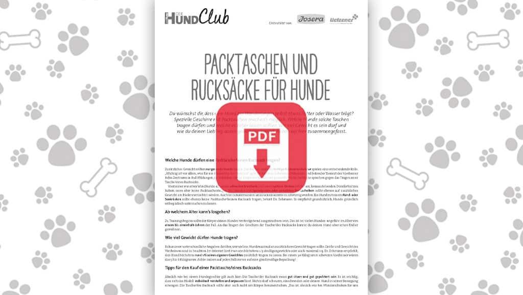 Download: Packtaschen und Rucksäcke für Hunde