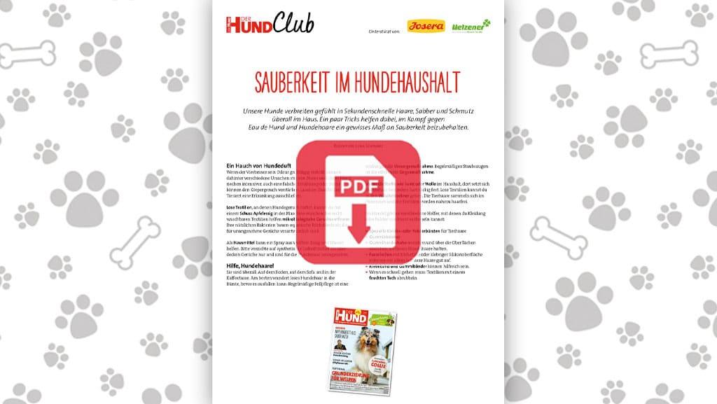 Download: Sauberkeit im Hundehaushalt