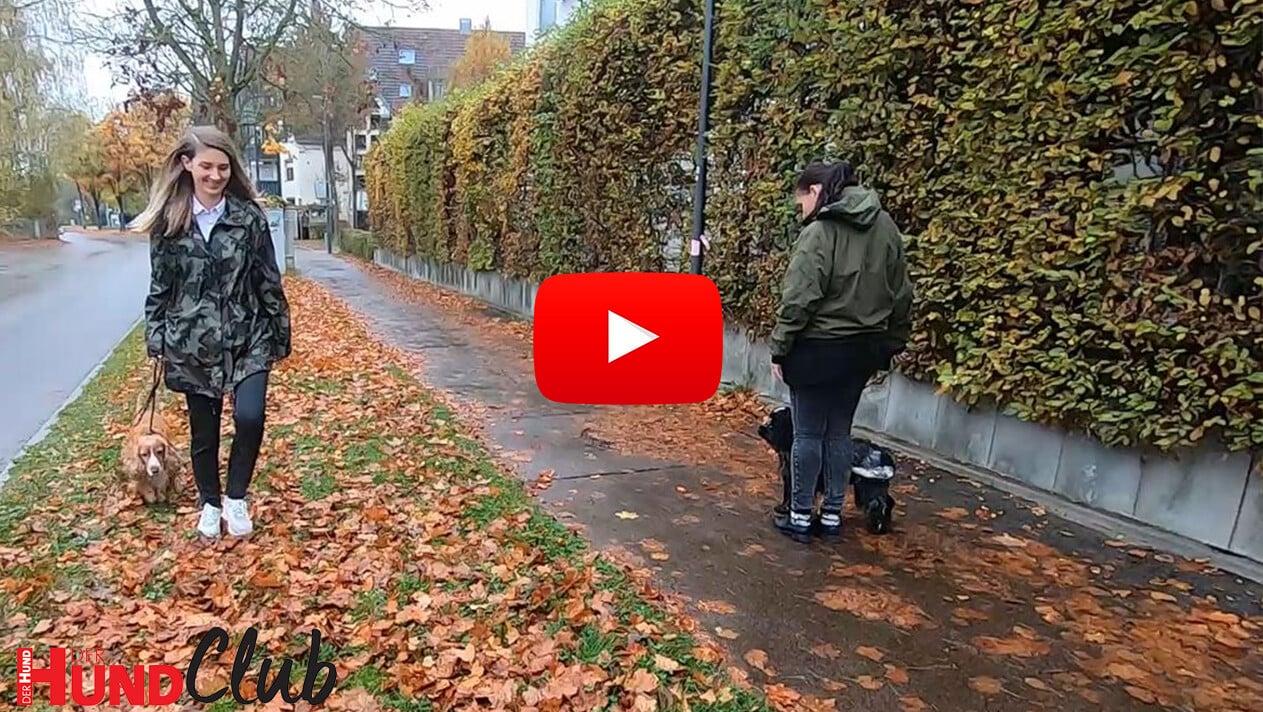 Hundebegegnungen meistern – mit Veronika Rothe
