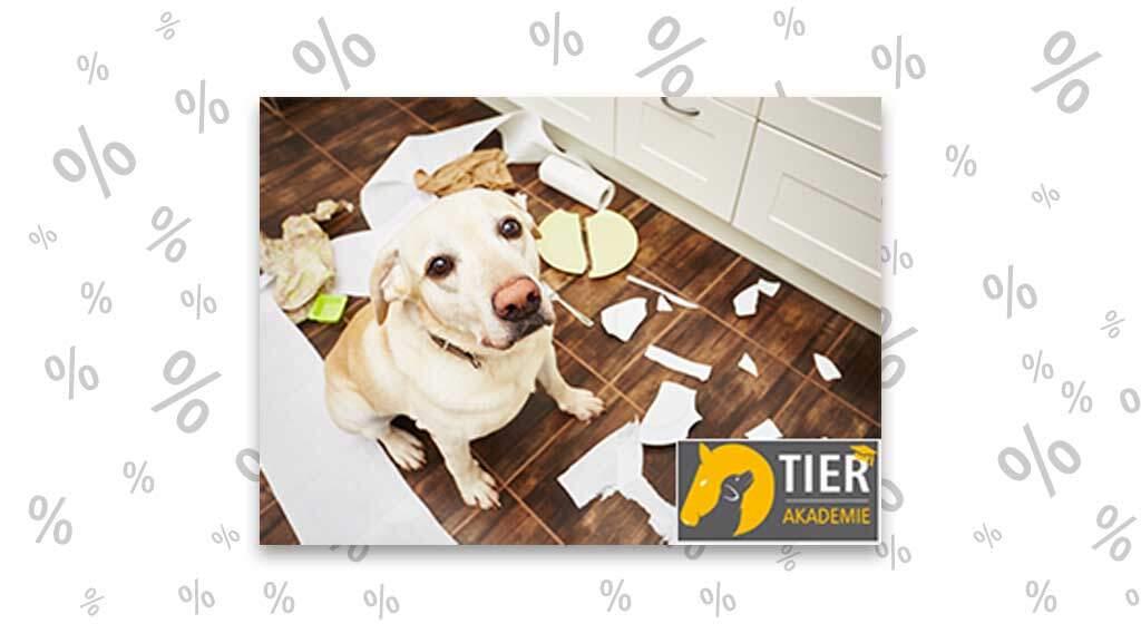 "<span class=""rabattheader"">Gratis!</span> Online Kurs: Trennungsstress beim Hund"