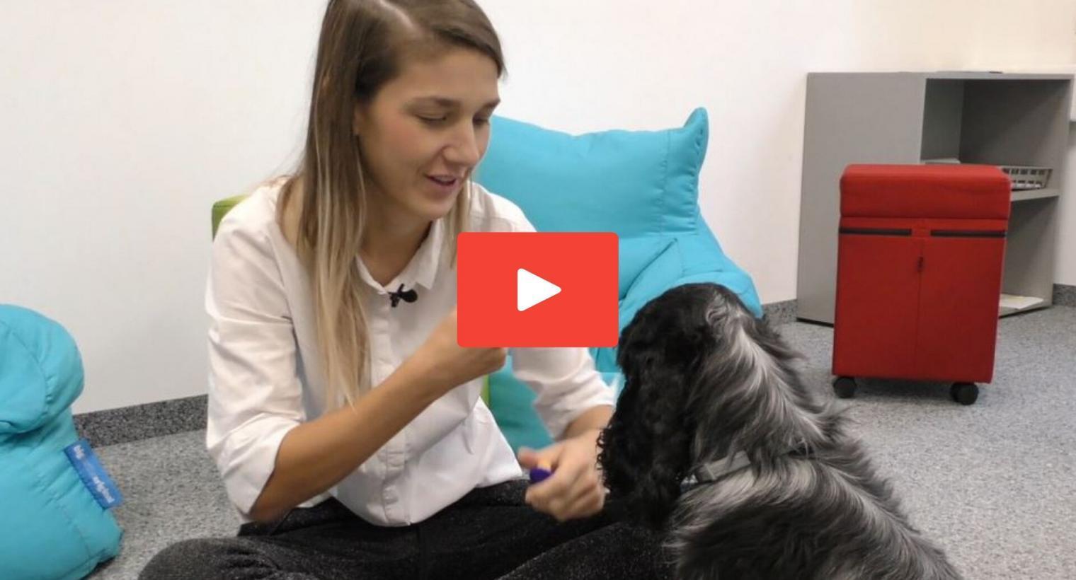 Der Klicker: Aufbau und Training – mit Veronika Rothe