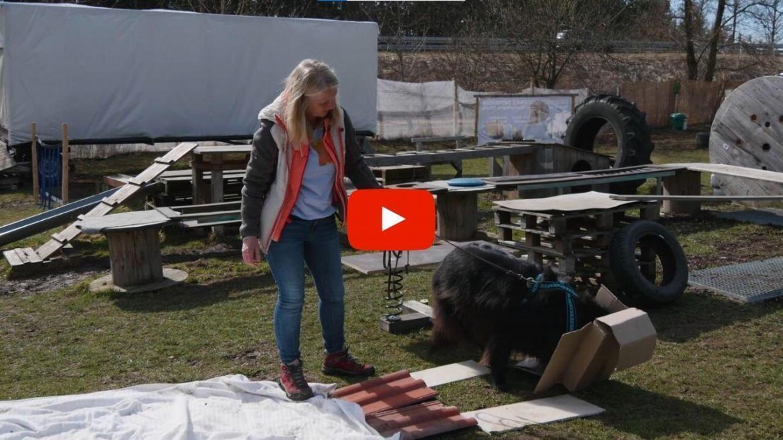 Der unsichere Hund – mit Anja Hanzel